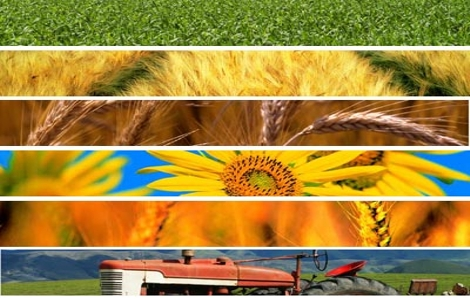 Articolo 62 decreto liberalizzazioni agroalimentare